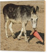 Burro Playing With Safety Cone Wood Print