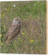 Burrowing Owl And Flowers Wood Print