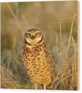 Burrowing Owl At Dawn Wood Print
