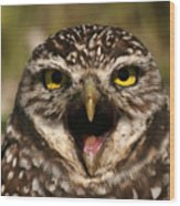 Burrowing Owl Eye To Eye Wood Print