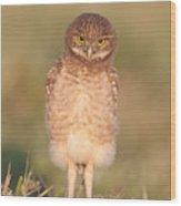 Burrowing Owl Fledgling I Wood Print