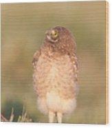 Burrowing Owl Fledgling II Wood Print