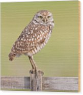 Burrowing Owl IIi Wood Print