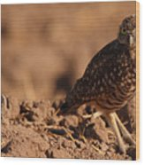 Burrowing Owl Looking Back Over Shoulder Wood Print