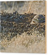 Burrowing Owl Peaking Outta The Hole  Wood Print