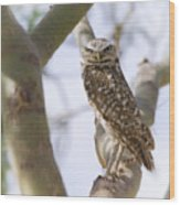 Burrowing Owl Perched On A Branch  Wood Print