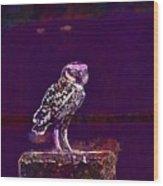 Burrowing Owl Small Owl Bird Nature  Wood Print