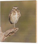 Burrowing Owl Taking A Break Wood Print