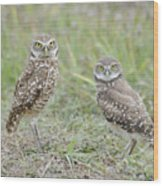 Burrowing Owls Nesting Wood Print