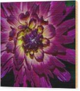Burst Of Purple Wood Print