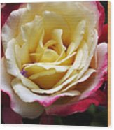 Burst Of Rose Wood Print