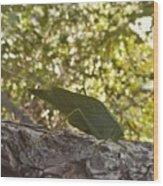 Bush Cricket Wood Print