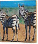 Bushnell's Zebras Wood Print
