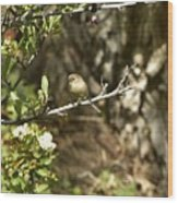 Bushtit On Branch In The Sun Wood Print