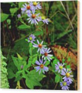 Bushy Aster In Sumac Grove Wood Print