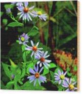 Bushy Aster Wood Print