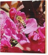 Busy As A Bee 031015 Wood Print