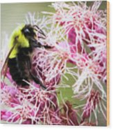 Busy As A Bumblebee Wood Print