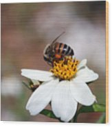 Busy Bee 3 Wood Print