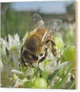 Busy Bee 5 Wood Print