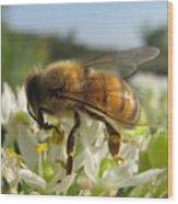 Busy Bee 6 Wood Print