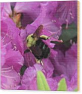 Busy Bee Collecting Pollen On Rhododendron  Wood Print
