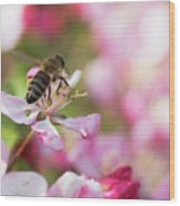 Busy Bee On A Crabapple Tree Wood Print