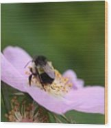 Busy Bumble Wood Print