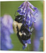 Busy Bumblebee.. Wood Print