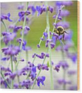 Busy In Lavender 3 Wood Print
