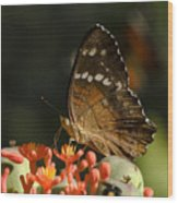 Butherfly Wood Print