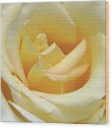 Butter Rose Wood Print