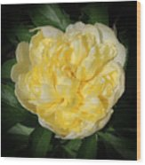 Buttercream Peony Wood Print