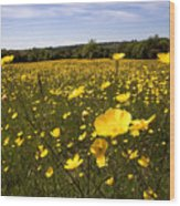 Buttercup Field Wood Print