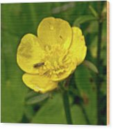 Buttercup Hospitality Wood Print