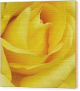 Buttercup Rose Wood Print
