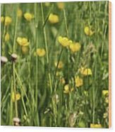 Buttercups And Green Grass At Moore State Park Wood Print