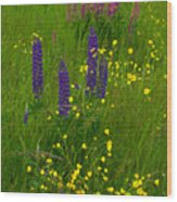 Buttercups And Lupines Wood Print