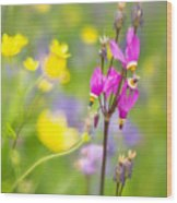 Buttercups And Shooting Star 1 Wood Print