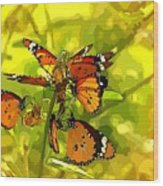 Butterflies Wood Print by Ankeeta Bansal