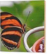 Butterflies Are Blooming Wood Print