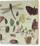 Butterflies, Insects And Flowers Wood Print