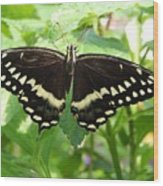 Butterflies Live - 8 Wood Print
