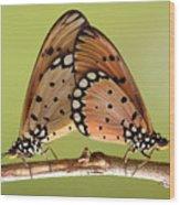 Butterflies Mating Wood Print