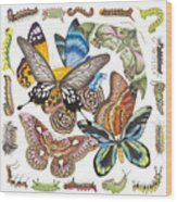 Butterflies Moths Caterpillars Wood Print