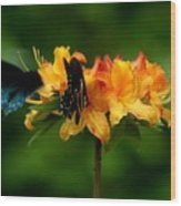 Butterflies On Yellow Azalea Wood Print
