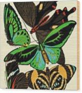 Butterflies, Plate-1 Wood Print