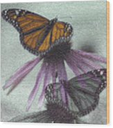 Butterflies Under Glass Wood Print