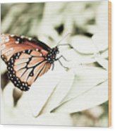 Butterfly 05 Wood Print