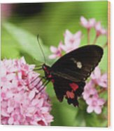 Butterfly-1 Wood Print